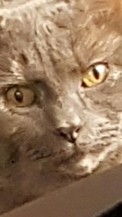 cat6.thumb.jpg.97fe14931ad1c84d91add494618f2d24.jpg
